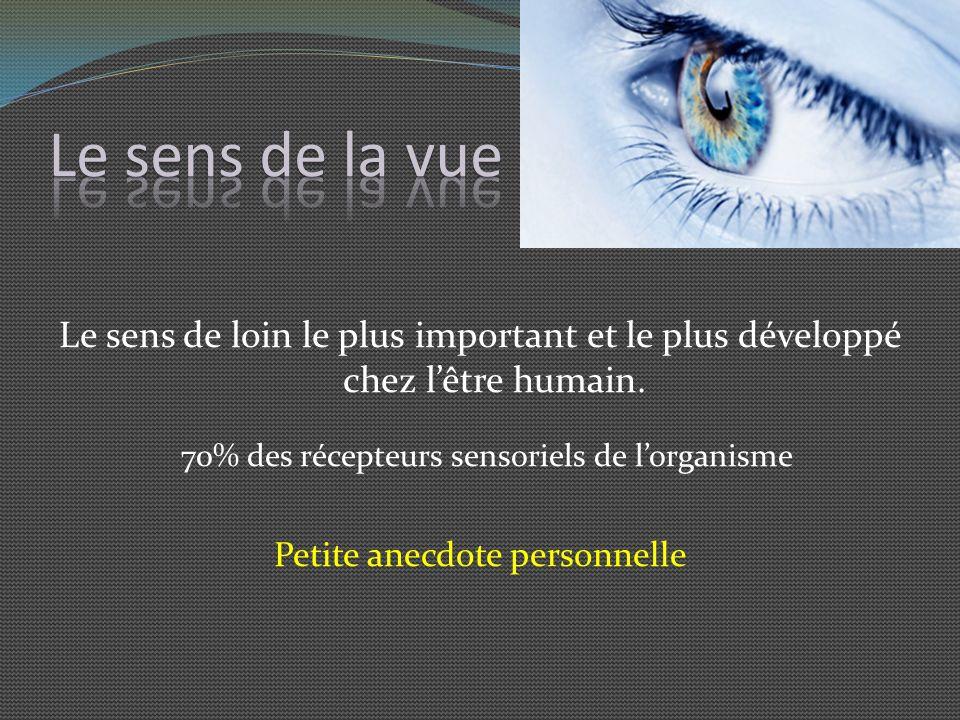 Le sens de la vueLe sens de loin le plus important et le plus développé chez l'être humain. 70% des récepteurs sensoriels de l'organisme.