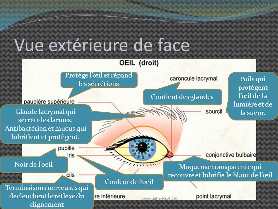 Vue extérieure de face Protège l'œil et répand les sécrétions
