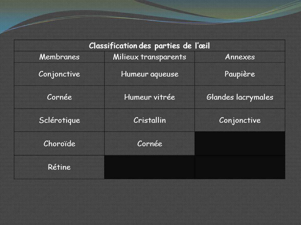 Classification des parties de l'œil