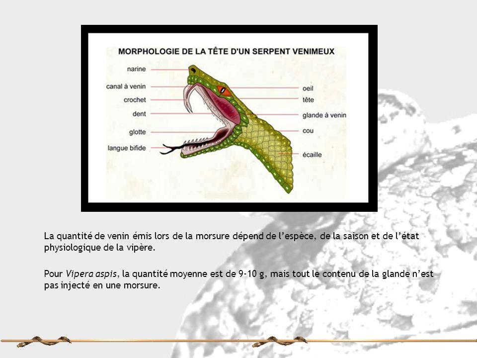 La quantité de venin émis lors de la morsure dépend de l'espèce, de la saison et de l'état physiologique de la vipère.