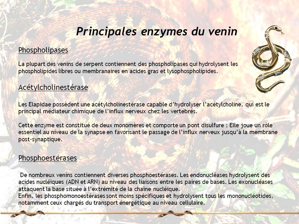 Principales enzymes du venin