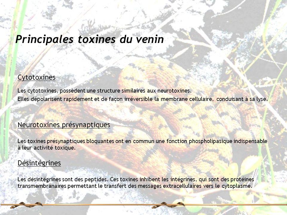 Principales toxines du venin