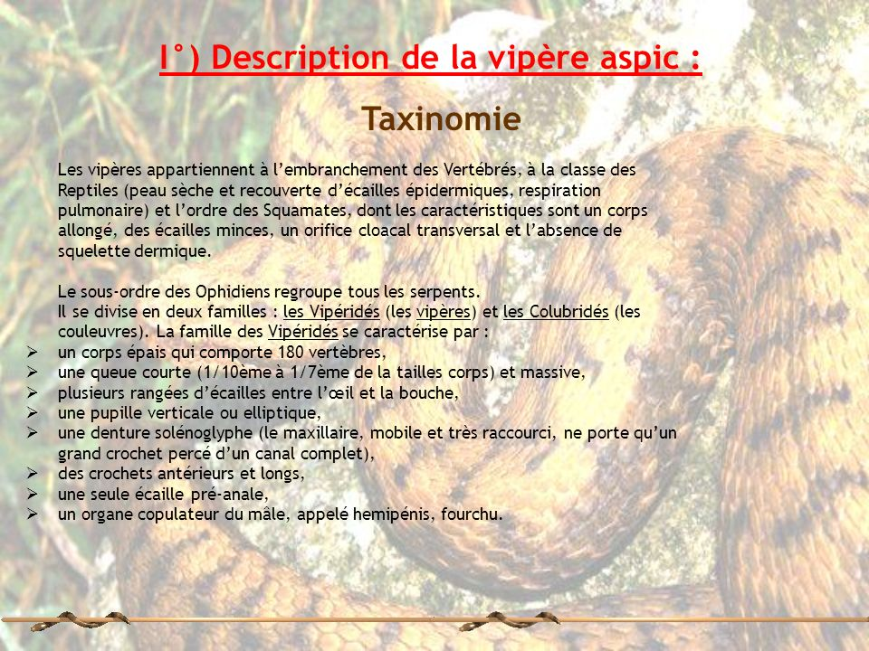 I°) Description de la vipère aspic :