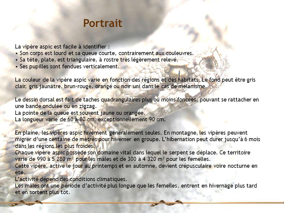 Portrait La vipère aspic est facile à identifier :