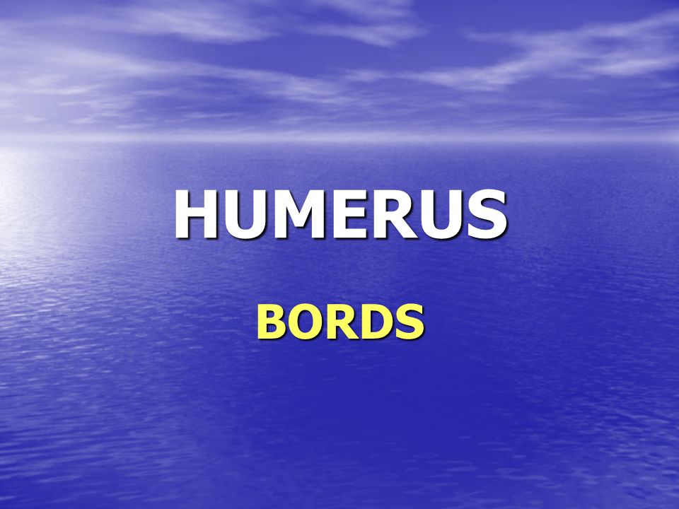HUMERUS BORDS
