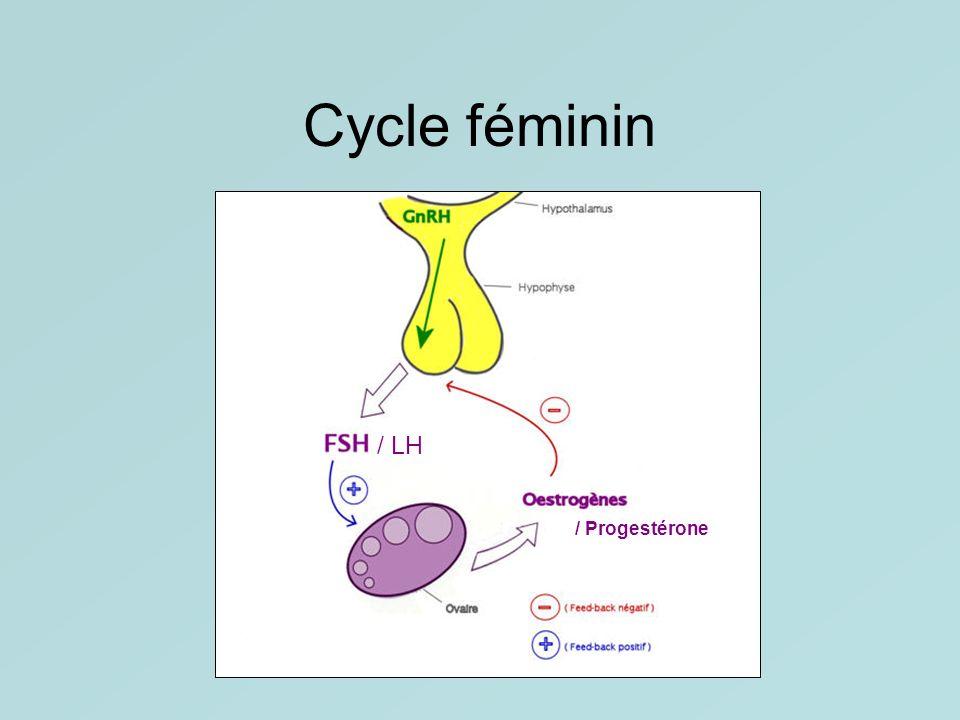 Cycle féminin / LH / Progestérone