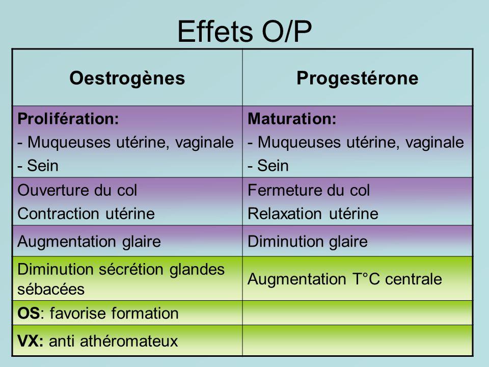 Effets O/P Oestrogènes Progestérone Prolifération: