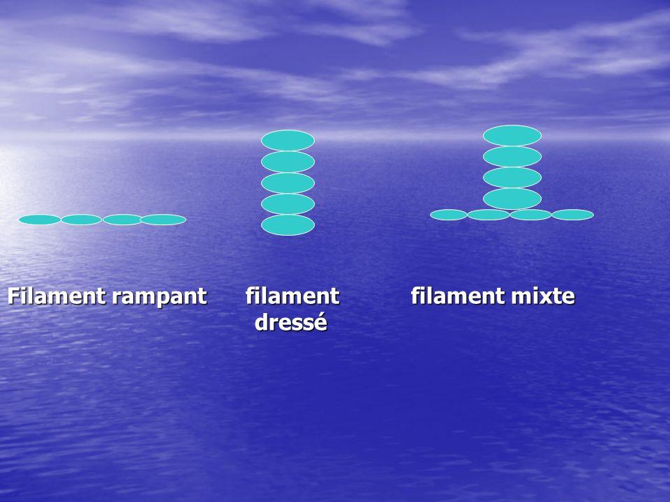 Filament rampant filament filament mixte