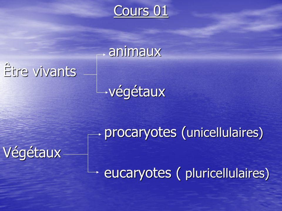 Cours 01 animaux. Être vivants. végétaux. procaryotes (unicellulaires) Végétaux.