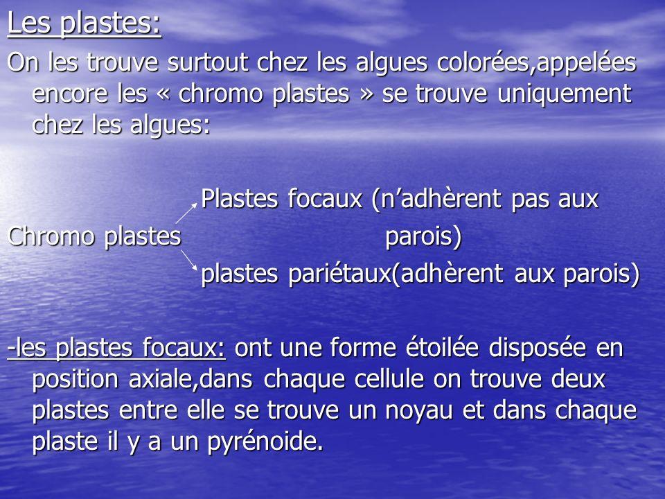 Les plastes: On les trouve surtout chez les algues colorées,appelées encore les « chromo plastes » se trouve uniquement chez les algues: