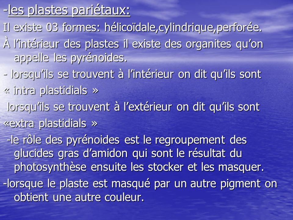 -les plastes pariétaux: