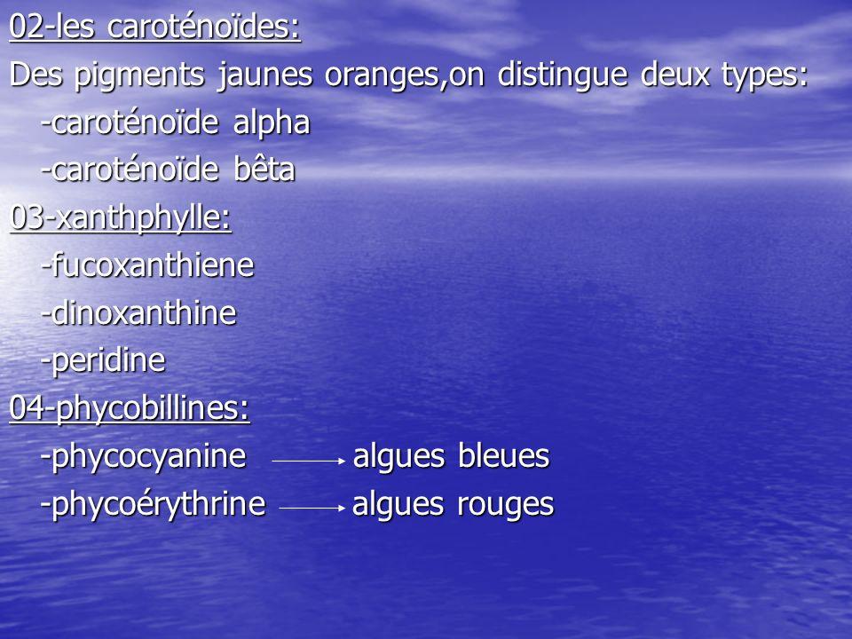 02-les caroténoïdes:Des pigments jaunes oranges,on distingue deux types: -caroténoïde alpha. -caroténoïde bêta.