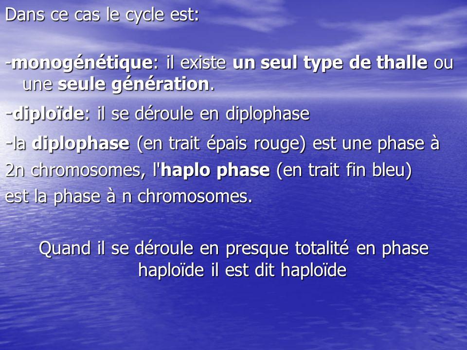 -diploïde: il se déroule en diplophase