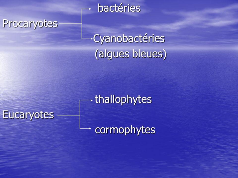 bactéries Procaryotes Cyanobactéries (algues bleues) thallophytes Eucaryotes cormophytes
