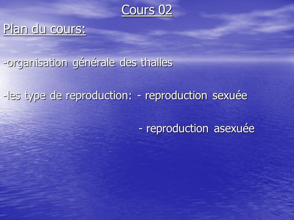 Cours 02 Plan du cours: -organisation générale des thalles