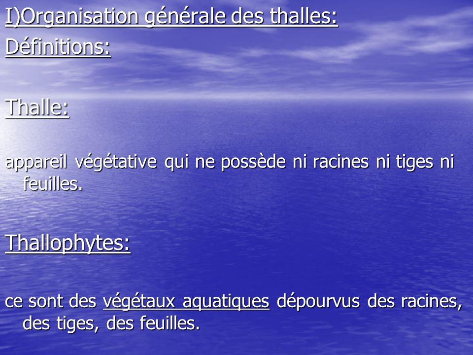 I)Organisation générale des thalles: Définitions: Thalle: