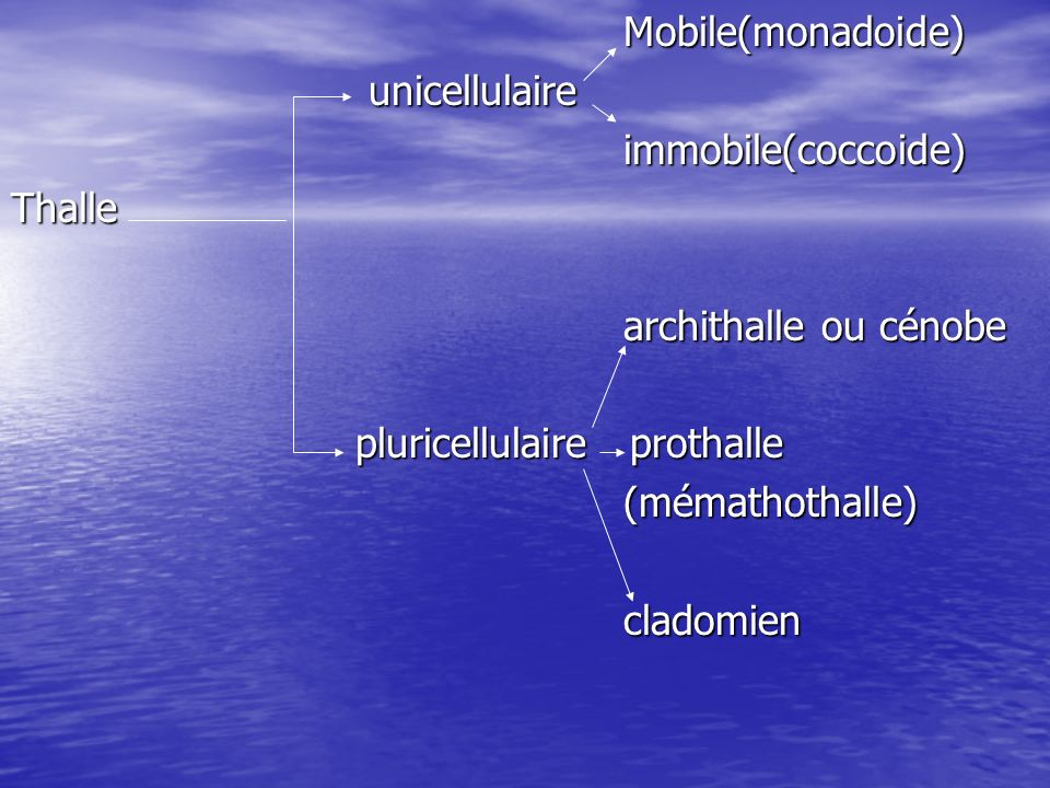 Mobile(monadoide)unicellulaire. immobile(coccoide) Thalle. archithalle ou cénobe. pluricellulaire prothalle.