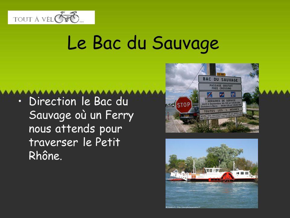 Le Bac du Sauvage Direction le Bac du Sauvage où un Ferry nous attends pour traverser le Petit Rhône.