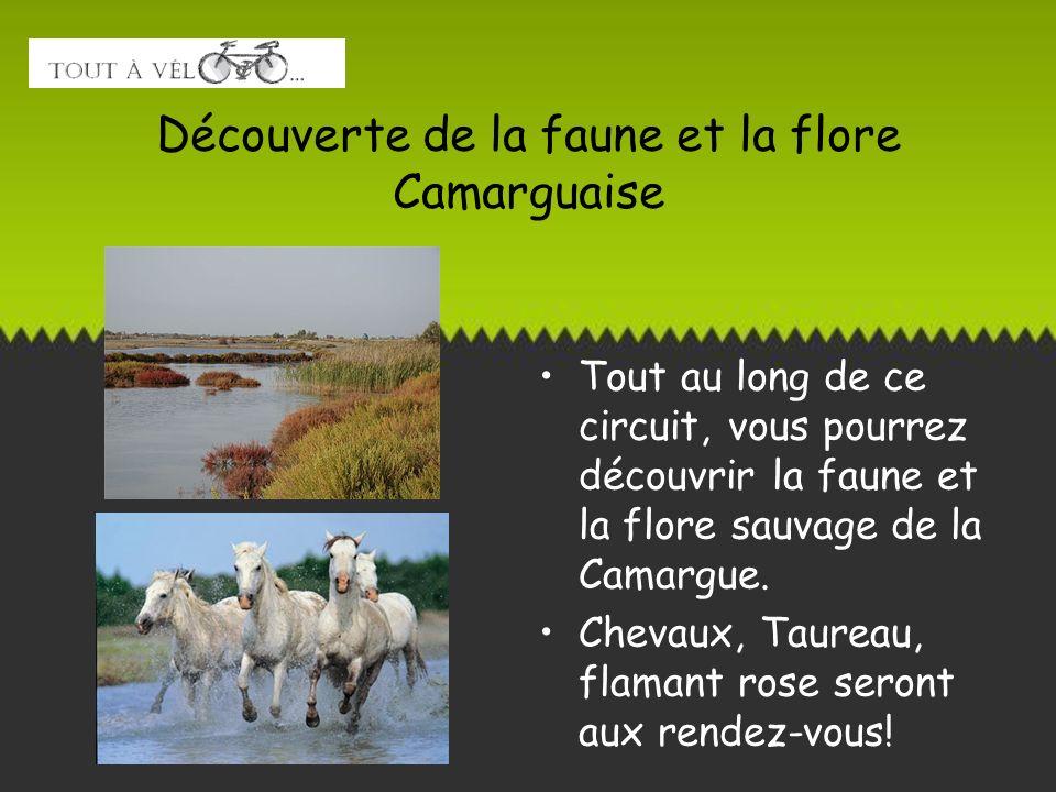 Découverte de la faune et la flore Camarguaise