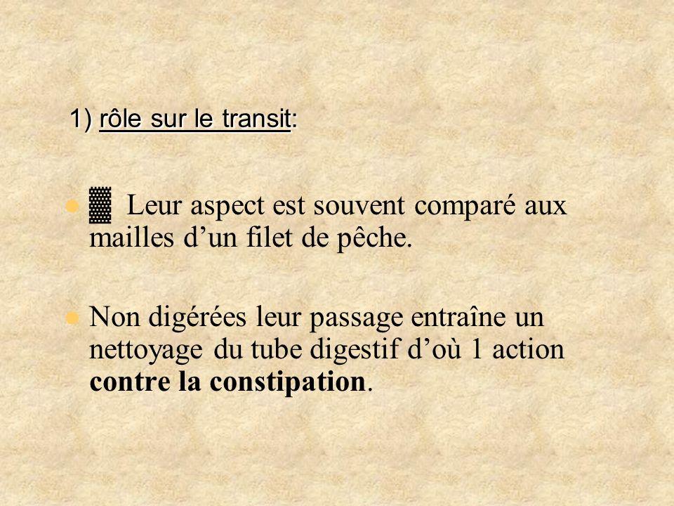 1) rôle sur le transit:▓ Leur aspect est souvent comparé aux mailles d'un filet de pêche.