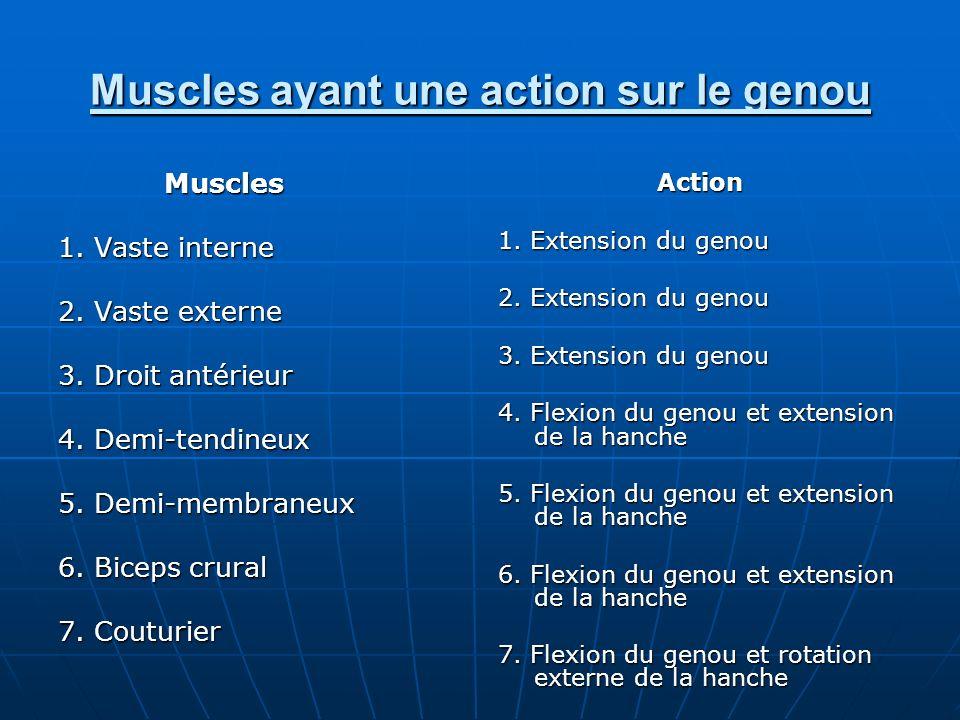 Muscles ayant une action sur le genou