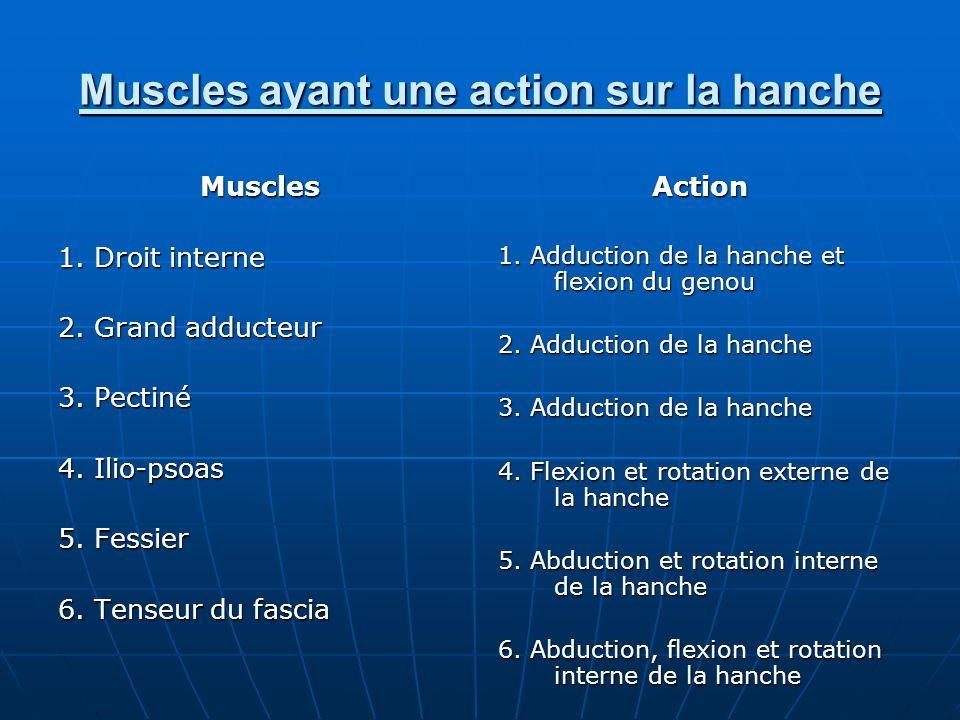 Muscles ayant une action sur la hanche