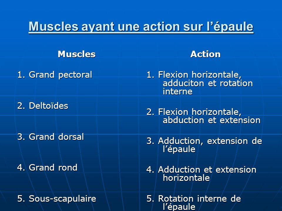 Muscles ayant une action sur l'épaule
