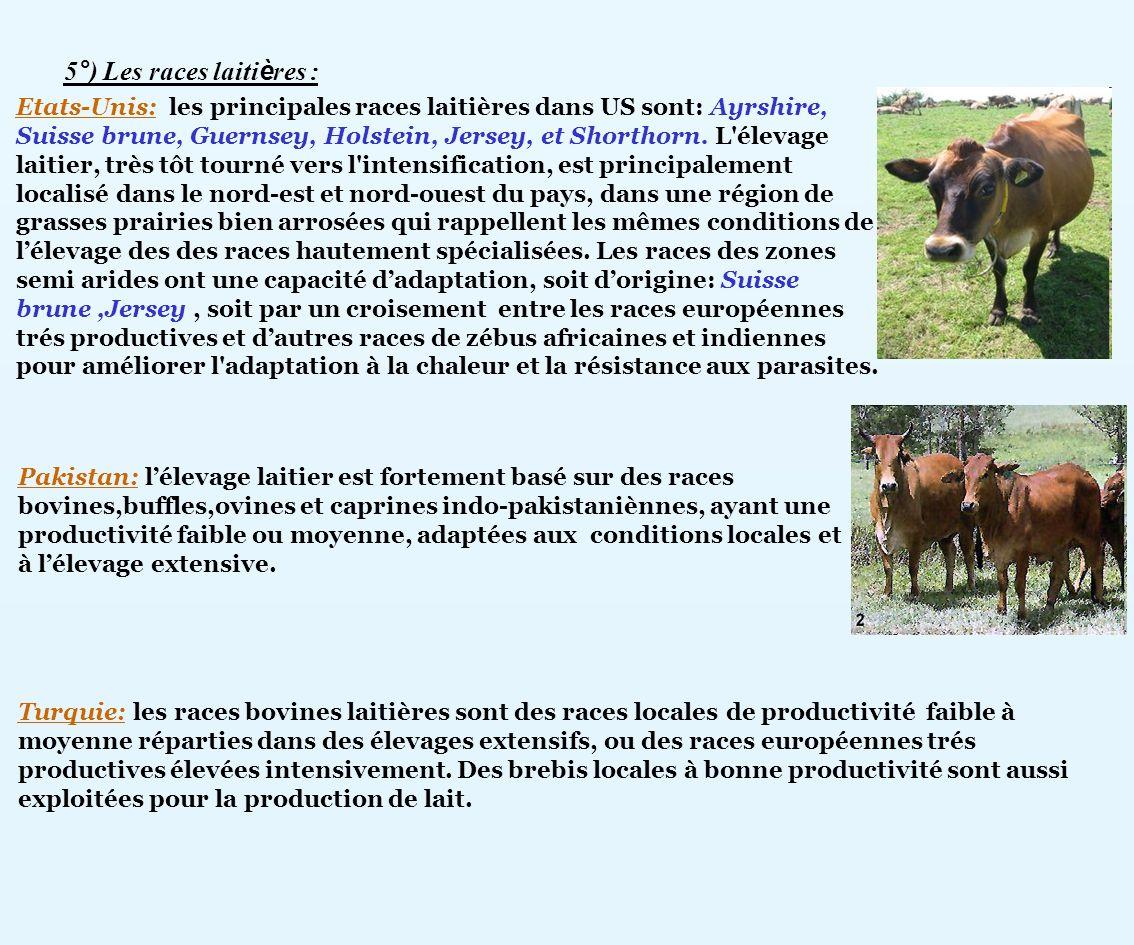 5°) Les races laitières :