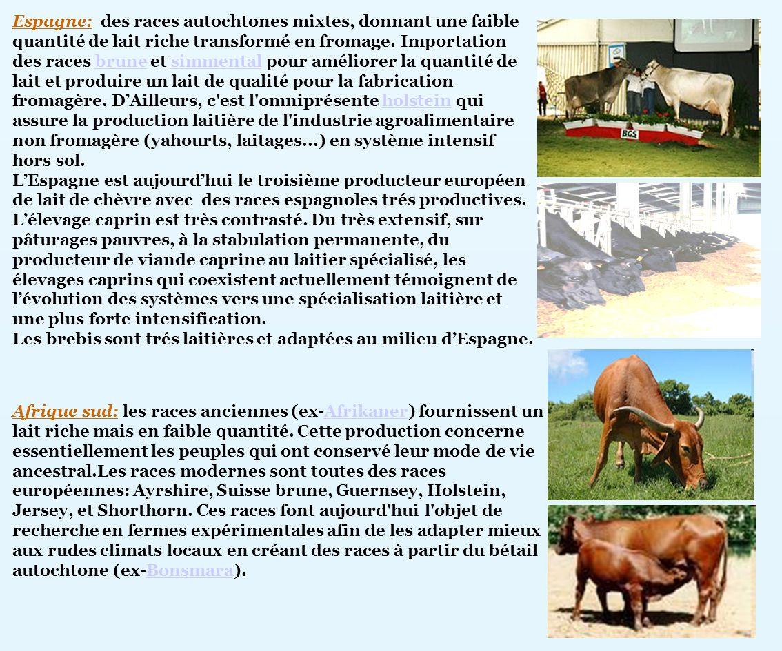 Espagne: des races autochtones mixtes, donnant une faible quantité de lait riche transformé en fromage. Importation des races brune et simmental pour améliorer la quantité de lait et produire un lait de qualité pour la fabrication fromagère. D'Ailleurs, c est l omniprésente holstein qui assure la production laitière de l industrie agroalimentaire non fromagère (yahourts, laitages...) en système intensif hors sol.