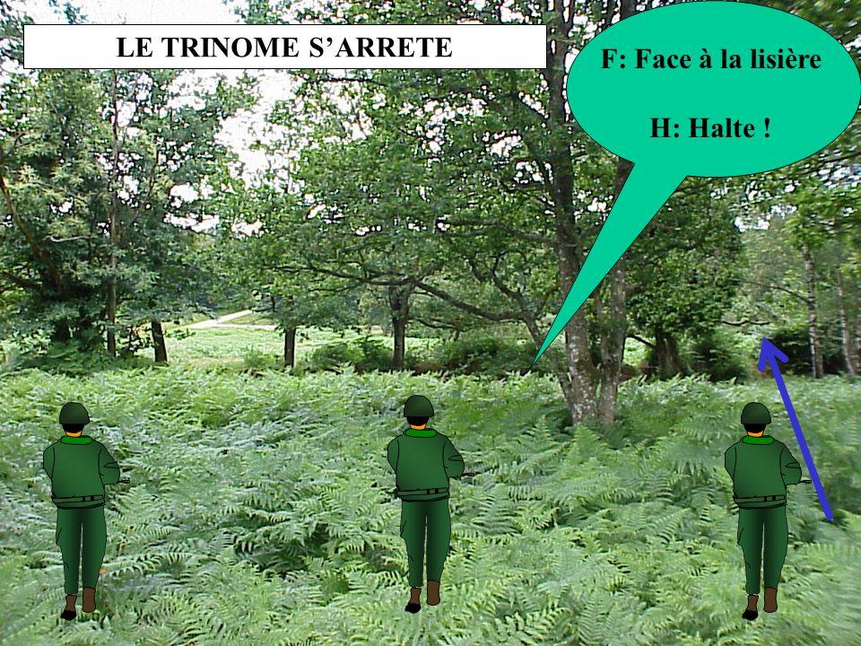 LE TRINOME S'ARRETE F: Face à la lisière H: Halte !