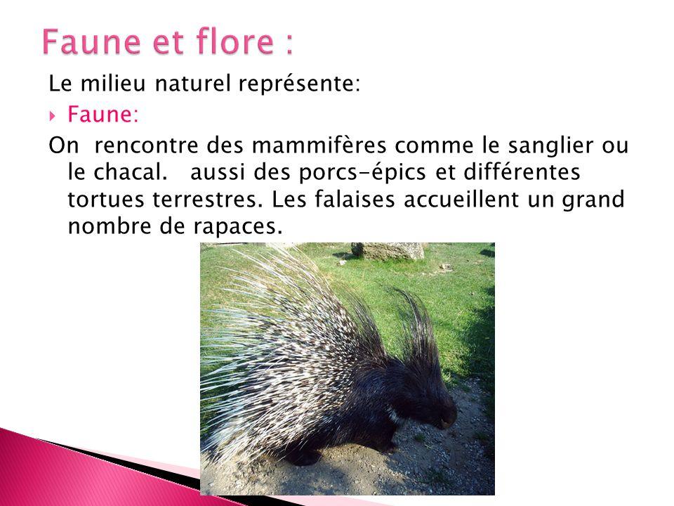 Faune et flore : Le milieu naturel représente: Faune: