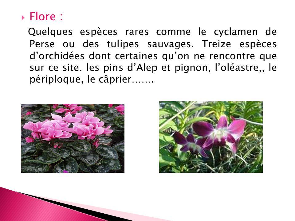 Flore :