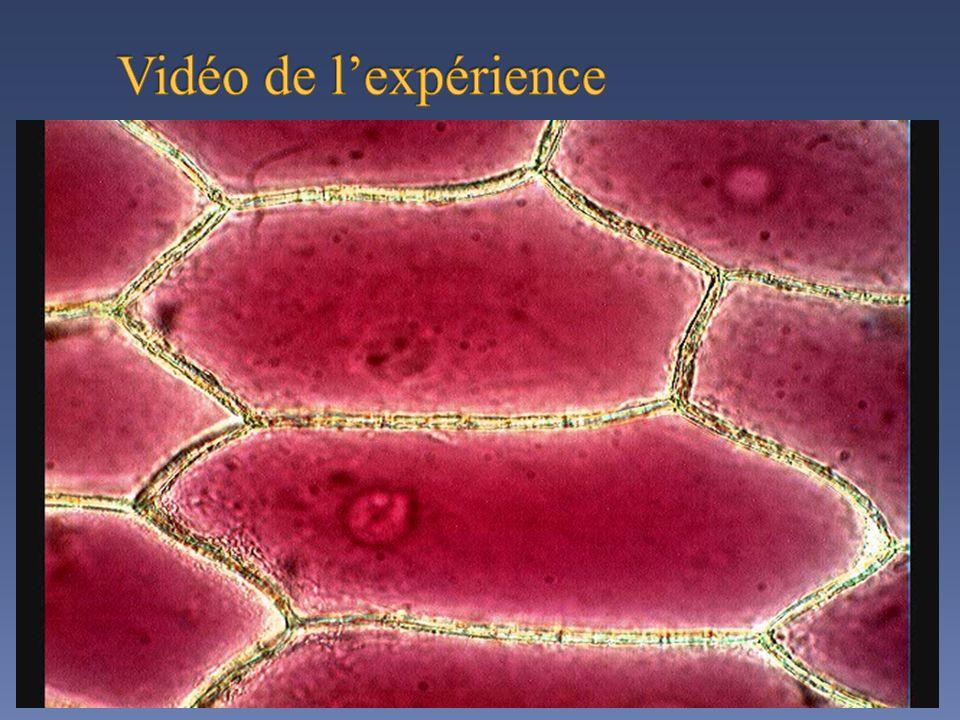 Vidéo de l'expérience