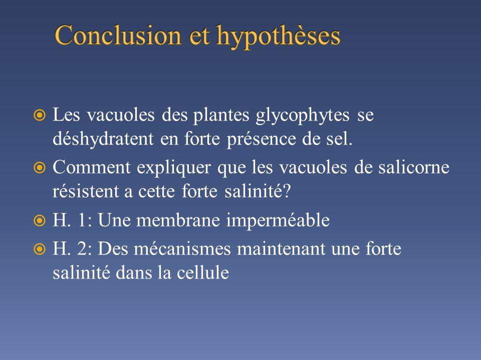 Conclusion et hypothèses