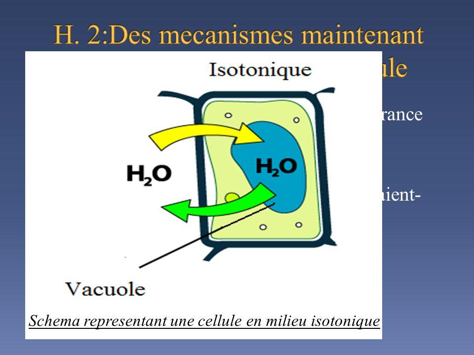 H. 2:Des mecanismes maintenant une hypersalinite dans la cellule
