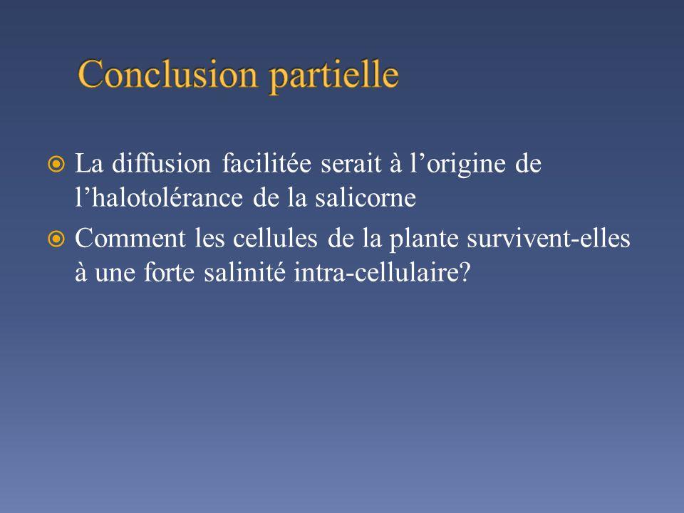 Conclusion partielle La diffusion facilitée serait à l'origine de l'halotolérance de la salicorne.