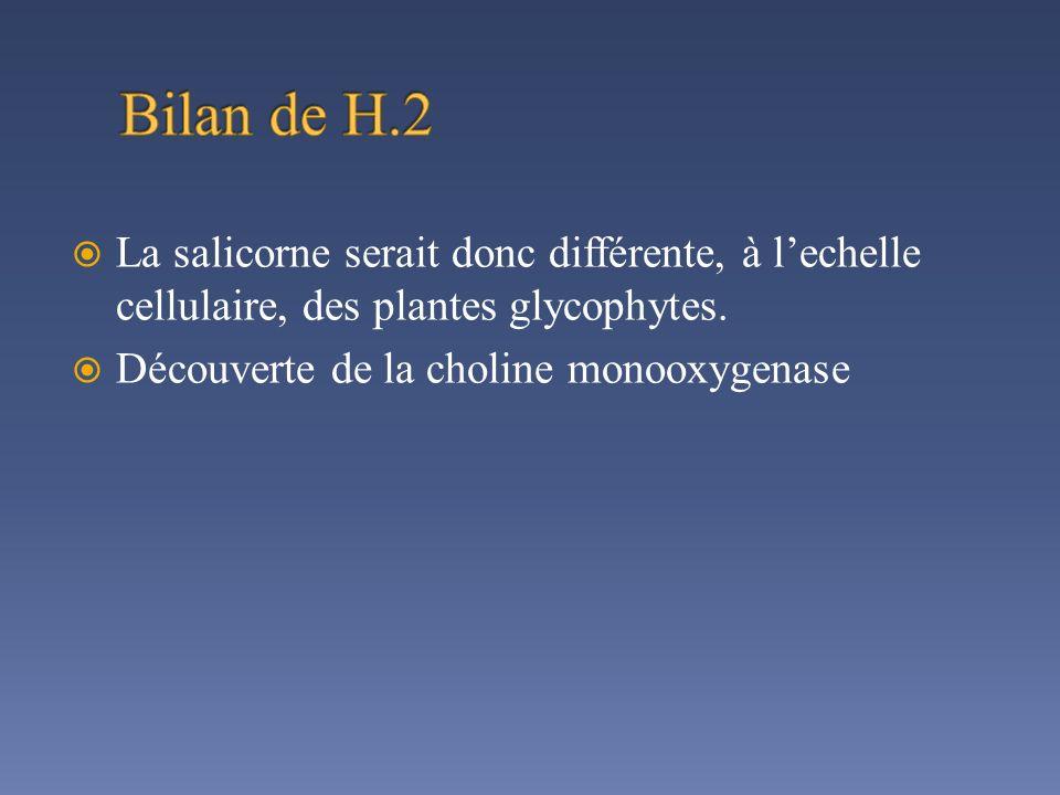 Bilan de H.2 La salicorne serait donc différente, à l'echelle cellulaire, des plantes glycophytes.