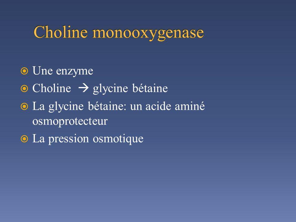 Choline monooxygenase