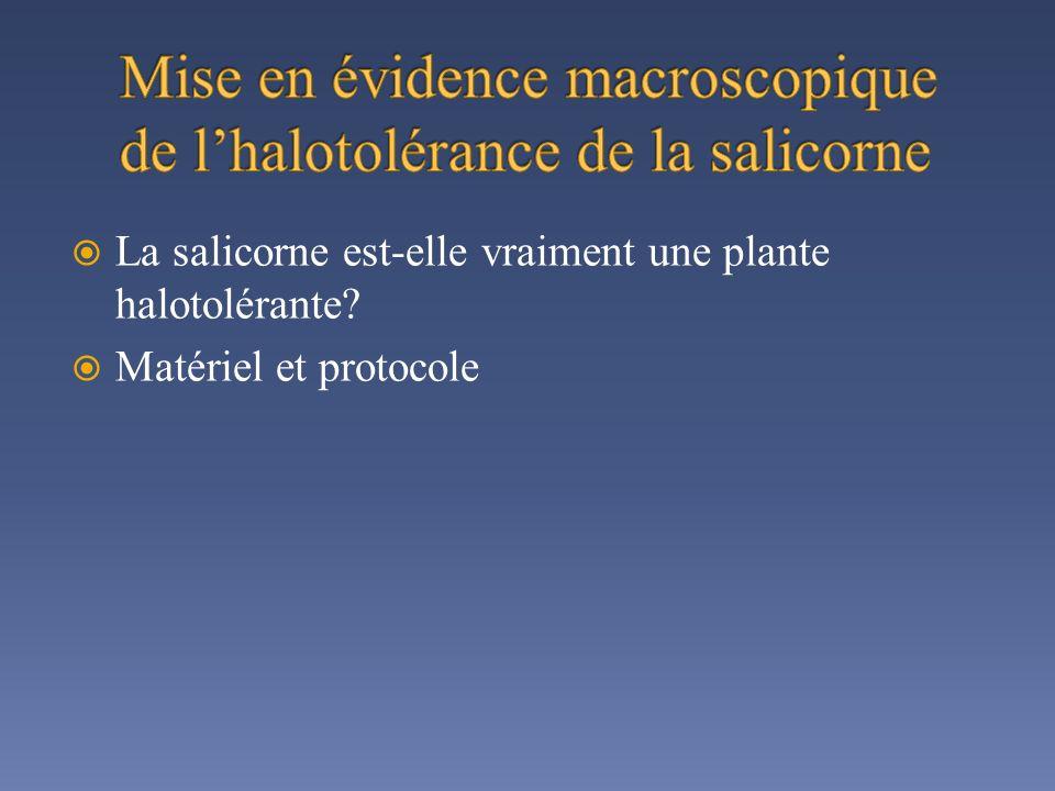 Mise en évidence macroscopique de l'halotolérance de la salicorne