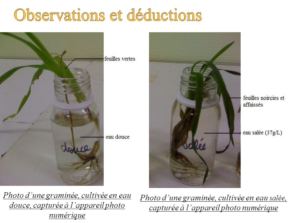 Observations et déductions