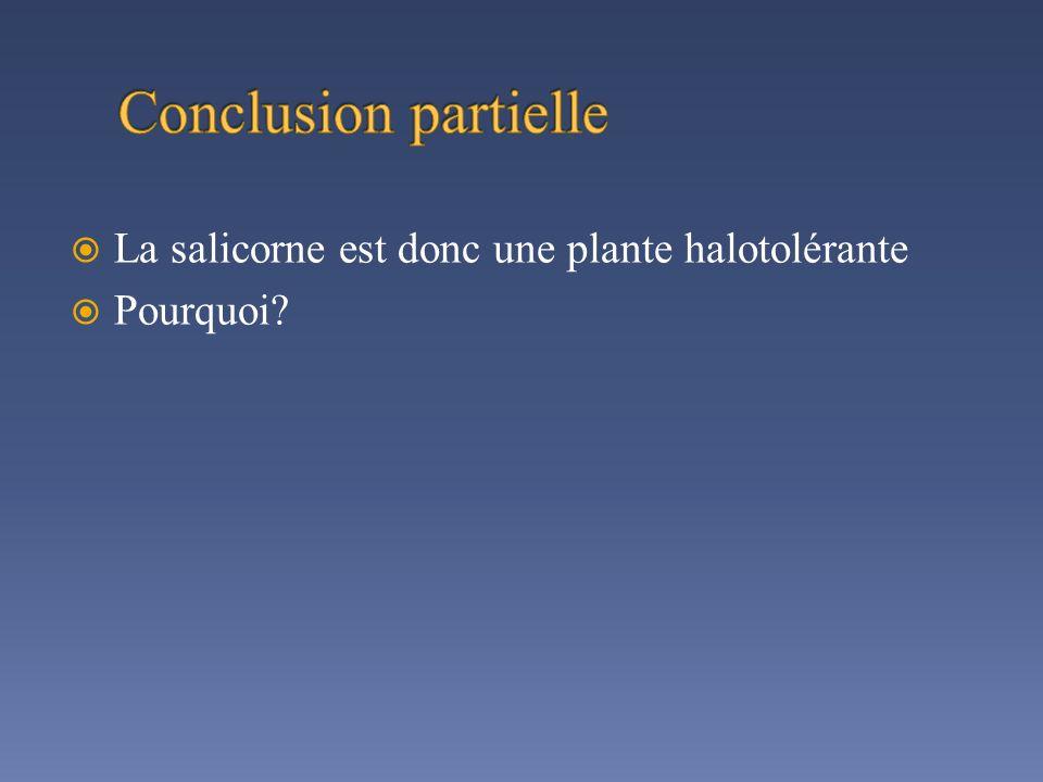 Conclusion partielle La salicorne est donc une plante halotolérante