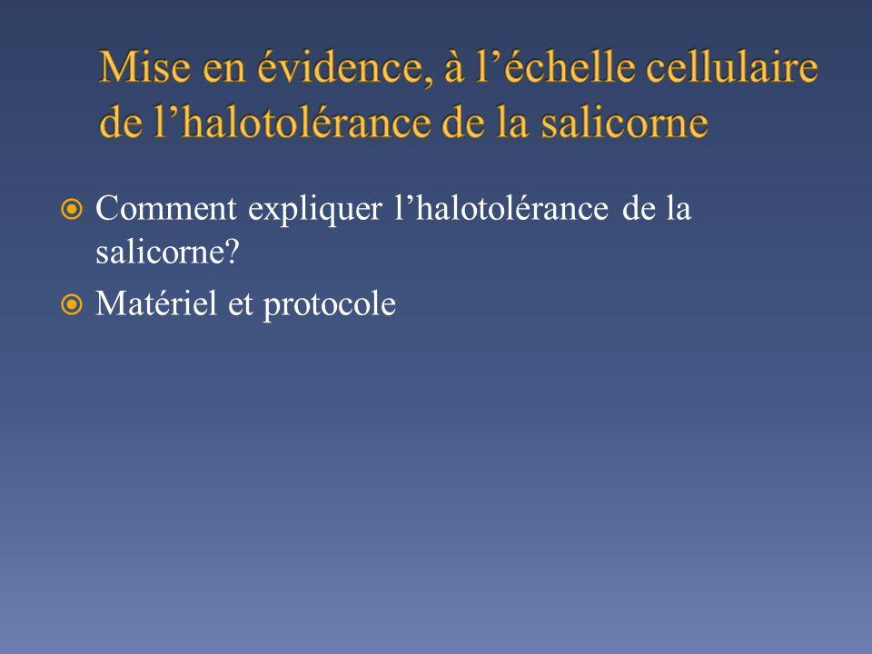 Mise en évidence, à l'échelle cellulaire de l'halotolérance de la salicorne