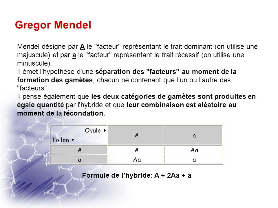 Formule de l'hybride: A + 2Aa + a