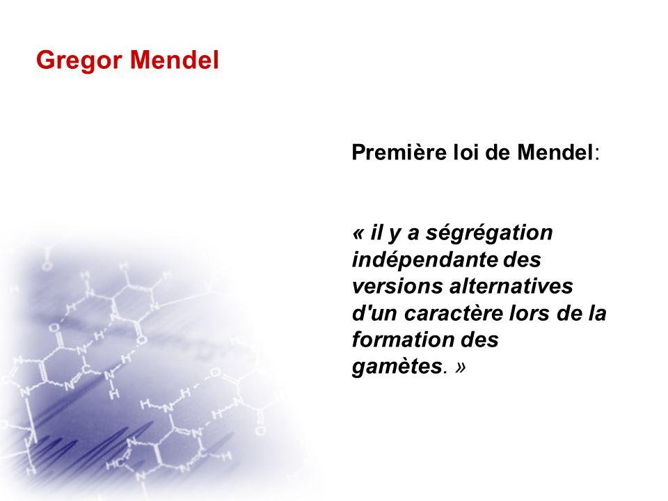 Gregor Mendel Première loi de Mendel: