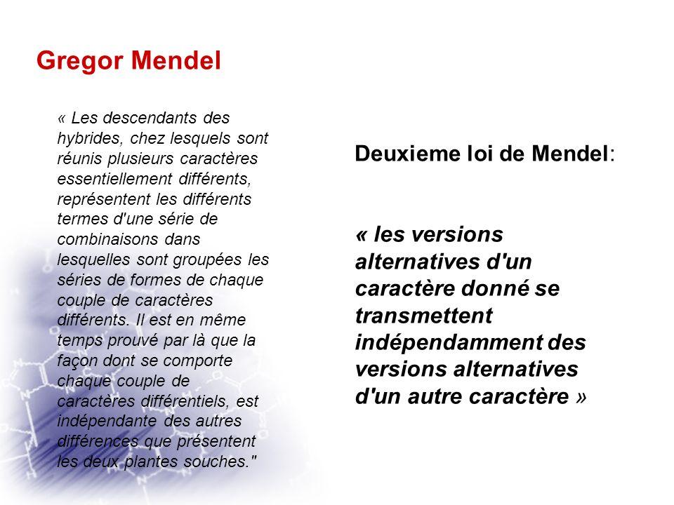 Gregor Mendel Deuxieme loi de Mendel: