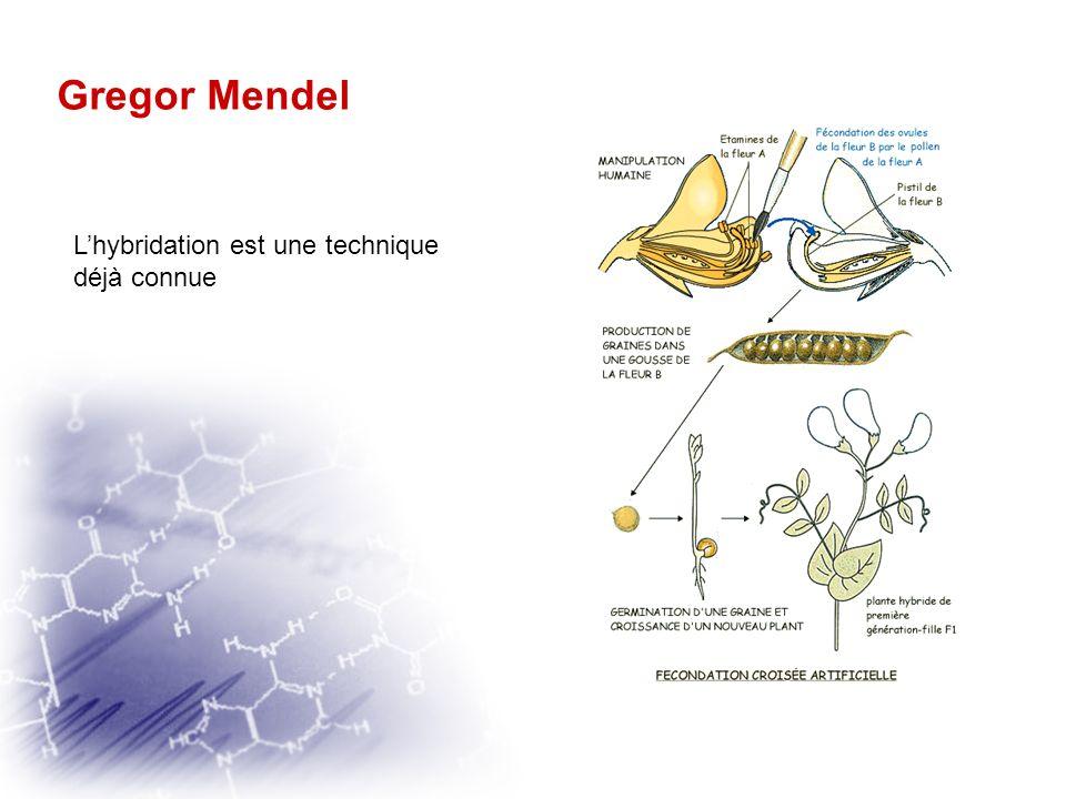 Gregor Mendel L'hybridation est une technique déjà connue