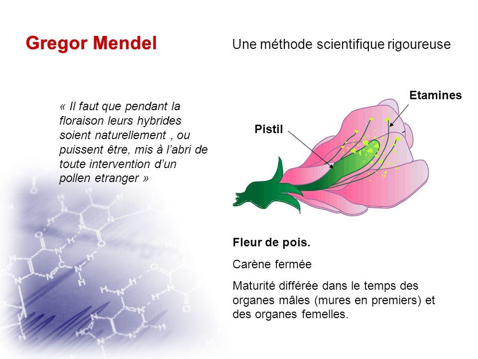 Gregor Mendel Une méthode scientifique rigoureuse