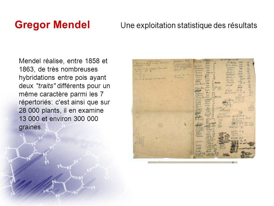 Gregor Mendel Une exploitation statistique des résultats
