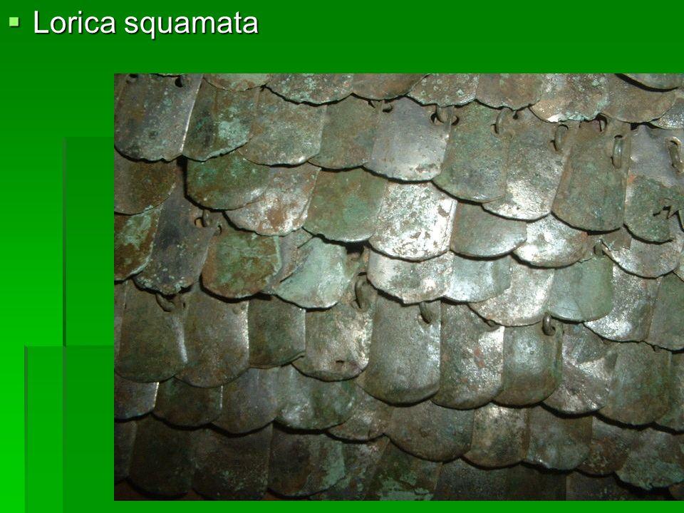 Lorica squamata