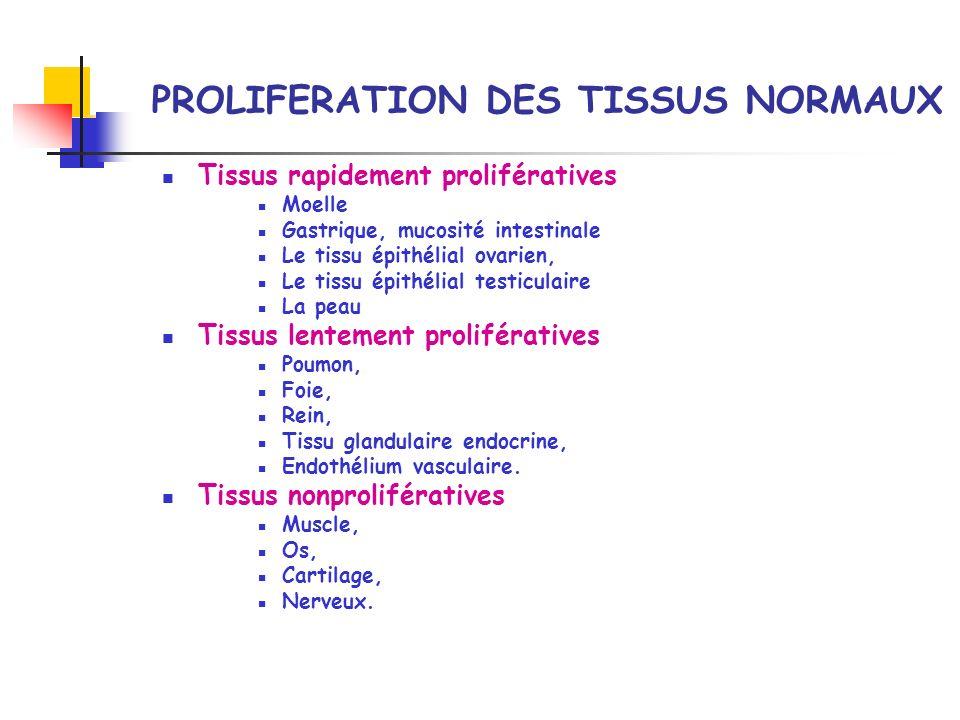 PROLIFERATION DES TISSUS NORMAUX